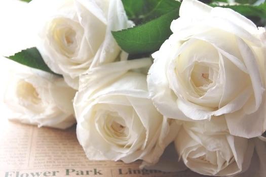 「美女と野獣」のバラはキーアイテム!バラに込められた意味を超解説